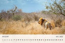 Avgusta s koledarjem odrinemo na afriški safari.