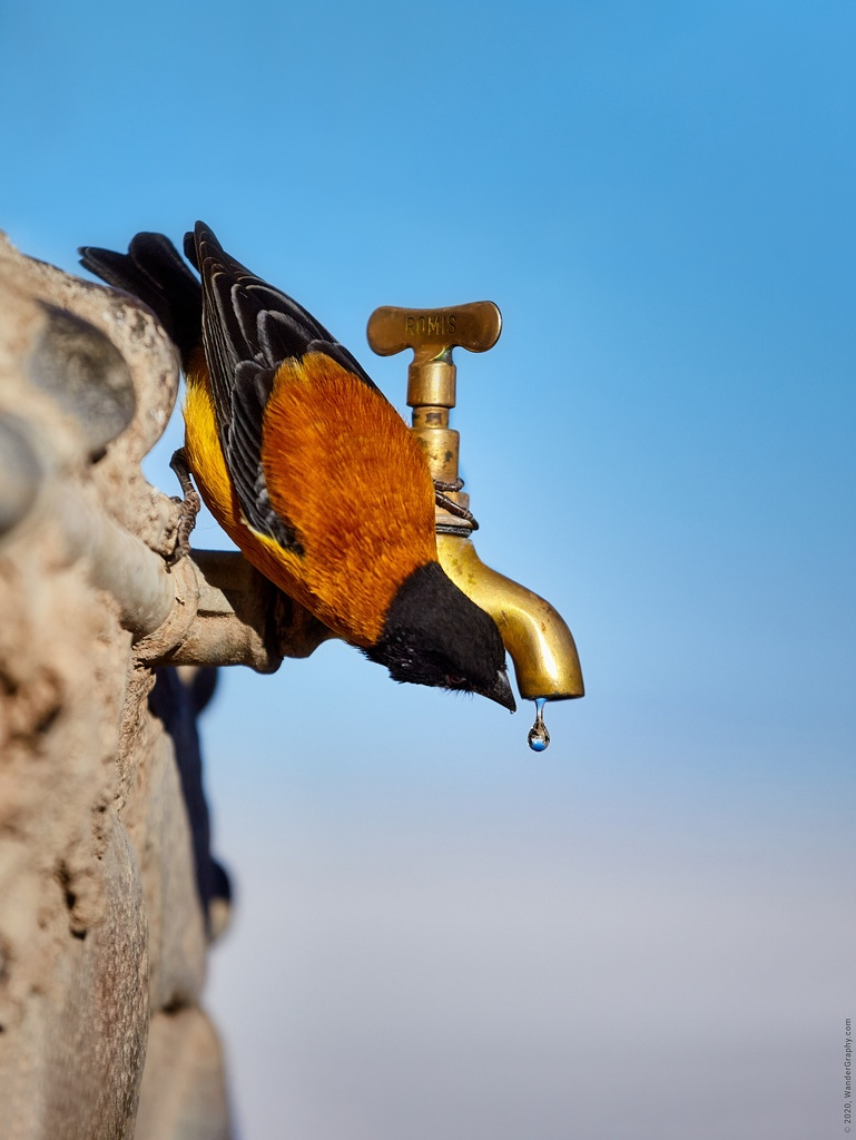 Every drop of water counts when in Salar de Uyuni, Bolivia. Wildlife is part of travel photography.